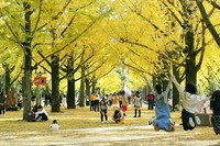 People enjoy viewing the autumn leaves of gingko trees in the southwestern Japan city of Kumamoto, on Nov. 14, 2020. (Mainichi/Kimiya Tanabe)