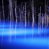 ライトアップで闇夜に浮かび上がった青い池=北海道美瑛町で2020年11月1日午後5時22分、貝塚太一撮影