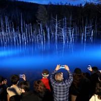 ライトアップが始まり、浮かび上がった青い池。今年から自撮り用に観光客に一時ライトが当たる演出も=北海道美瑛町で2020年11月1日午後4時50分、貝塚太一撮影