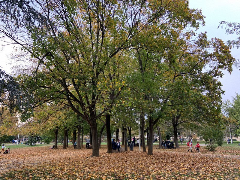 秋らしく落ち葉が積もる公園は開放中。外の空気を求めてやってくる人は多い=筆者撮影