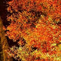 ライトアップされた東福寺の紅葉=京都市東山区で2020年11月18日午後5時56分、川平愛撮影