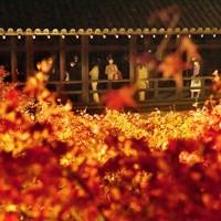 ライトアップされた紅葉を通天橋から眺める人たち=京都市東山区の東福寺で2020年11月18日午後5時29分、川平愛撮影
