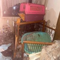 犬や猫を劣悪な環境で飼育していたとして動物愛護法違反で逮捕された増山珠美容疑者の自宅。ケージやごみが散乱している=神戸ナナプロジェクト提供