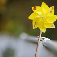 「世界道路交通犠牲者の日」に合わせて、県警が死亡事故現場に設置した黄色い風車。市街地から離れた路傍にひっそりと置かれていた=秋田市で2020年11月11日、小川昌宏撮影