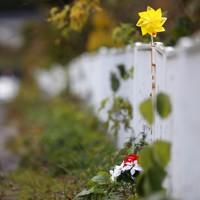 「世界道路交通犠牲者の日」に合わせて、県警が死亡事故現場に設置した黄色い風車。風車の下には花が置かれていた=秋田市で2020年11月11日、小川昌宏撮影