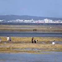 干潮時には海面にイノーが現れ、休日は家族連れなどでにぎわう=沖縄県浦添市で2020年11月、徳野仁子撮影