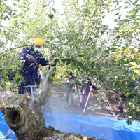 果樹園で高圧洗浄機を使い樹皮の除染をする農協職員=福島市で2011年11月23日午前9時40分、小出洋平撮影