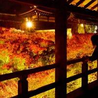 ライトアップされた紅葉を通天橋から眺める人たち=京都市東山区の東福寺で2020年11月18日午後6時5分、川平愛撮影