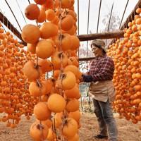 ハウスの中にずらりと下げられた干し柿=佐賀市大和町で2020年11月18日、田鍋公也撮影