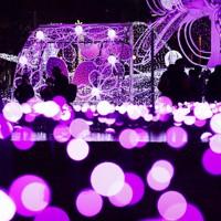 点灯時間と期間を短縮して始まった「さっぽろホワイトイルミネーション」=札幌市中央区の大通公園で2020年11月20日午後、貝塚太一撮影