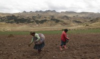 Women sow potatoes in a field in Pisac, in southern rural Peru, on Oct. 30, 2020. (AP Photo/Martin Mejia)