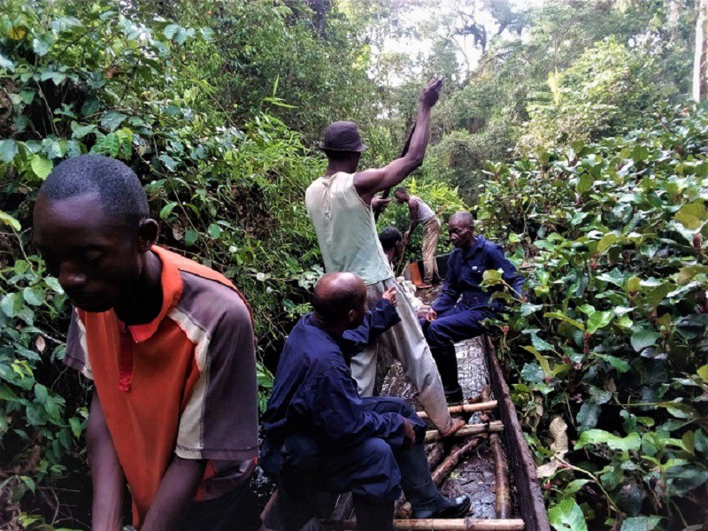 MOTTAINAI:地球の肺を守ろう~コンゴ熱帯雨林保護の最前線から(13 ...