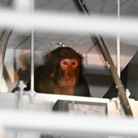 福岡市役所の地下駐車場に逃げ込んだサル=福岡市中央区で2020年12月3日午後2時48分、徳野仁子撮影