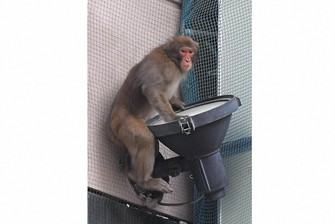 A monkey is seen in Tenjin district, a downtown area in Fukuoka's Chuo Ward on Dec. 3, 2020. (Mainichi/Minoru Kanazawa)