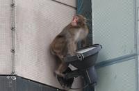 A monkey is seen climbing about in the Tenjin shopping area in the city of Fukuoka's Chuo Ward, on Dec. 3, 2020. (Mainichi/Minoru Kanazawa)