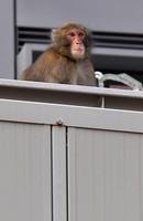 A monkey is seen out in the Tenjin shopping area in Chuo Ward, Fukuoka, on Dec. 3, 2020. (Mainichi/Minoru Kanazawa)