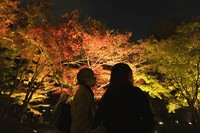 People wearing face masks watch maple trees illuminated for the fall foliage season at Otaguro Park in Tokyo on Dec. 3, 2020. (AP Photo/Hiro Komae)