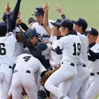 高校野球秋季九州大会で初優勝し、喜ぶ大崎の選手たち=矢頭智剛撮影