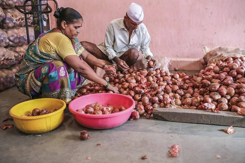 インドは世界2位のタマネギ生産国 (Bloomberg)