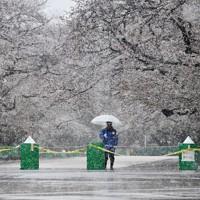 新型コロナウイルス感染拡大防止のため立ち入り禁止になっている上野公園の桜通りでは、「外出自粛」が続くなか雪が降り人通りはまばらだった=東京都台東区で2020年3月29日午前9時52分、大西岳彦撮影