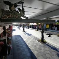 観光客が激減した太宰府天満宮の参道には今年もツバメが巣を作り、ヒナが育っている。閉店時刻を早めて5月下旬から営業を再開した土産物店の女性は「いまだに客足は例年の1割にも満たないが、参道の店が開いているのが天満宮の風景のひとつ。安全を守りながらこの風景を守っていきたい」=福岡県太宰府市で2020年6月2日午後4時13分、津村豊和撮影