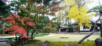 The fall colors in the garden of Kansenji temple in Suginami Ward, Tokyo, help provide relief from cabin fever. (Mainichi/Greg Mettam)