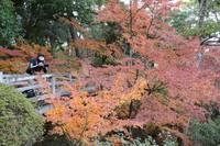 The sample maple tree is seen at Momijidani Garden in the city of Wakayama on Dec. 17, 2020. (Mainichi/Satoshi Yamaguchi)