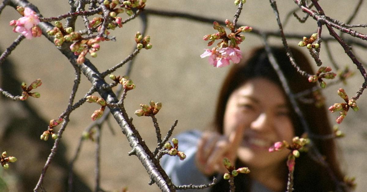 桜 予想 京都 2021 開花