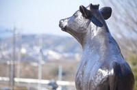The statue of Genki-kun the bull overlooks central Shoo, Okayama Prefecture, on Feb. 6, 2021. (Mainichi/Kazuki Iwamoto)