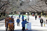 Tokyo Metropolitan Government staff are seen setting out traffic cones and a signboard to instruct people to walk on the right at Ueno Park in Tokyo's Taito Ward on Feb. 23, 2021. (Mainichi/Masahiro Ogawa)