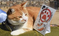 "Sanjuro, the cat ""owner"" of Bitchu Matsuyama Castle, is seen looking at a stamp bearing an illustration of himself, at the castle in Takahashi, Okayama Prefecture, on Feb. 22, 2021. (Mainichi/Kazuki Iwamoto)"