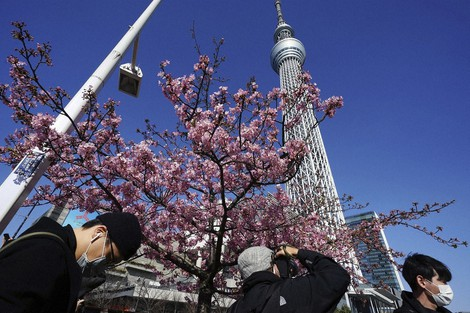 People wearing masks to help curb the spread of the coronavirus look at Kawazu cherry blossoms near the Tokyo Skytree, the tallest structure in Japan, on Feb. 23, 2021, in Tokyo. (AP Photo/Eugene Hoshiko)