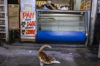 A cat stretches in front of a bakery at La Vega market in Santiago, Chile, on March 4, 2021. (AP Photo/Esteban Felix)