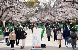 一方通行などの新型コロナウイルス対策が取られる上野公園で花見を楽しむ人たち=東京都台東区で2021年3月22日午後3時31分、手塚耕一郎撮影