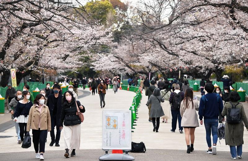 Orang-orang yang menikmati pemandangan bunga sakura di Taman Ueno, tempat diambilnya tindakan pencegahan virus corona baru seperti jalan satu arah = Difoto oleh Koichiro Tezuka pada pukul 15:31 tanggal 22 Maret 2021 di Taito-ku, Tokyo