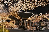 Cherry blossoms are illuminated in front of Kon-do hall, a designated national treasure, at Mii-dera temple in Otsu, Shiga Prefecture, on March 26, 2021. (Mainichi/Kenichi Isono)