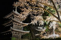Cherry blossoms are illuminated in front of the three-story pagoda at Mii-dera temple in Otsu, Shiga Prefecture, on March 26, 2021. (Mainichi/Kenichi Isono)