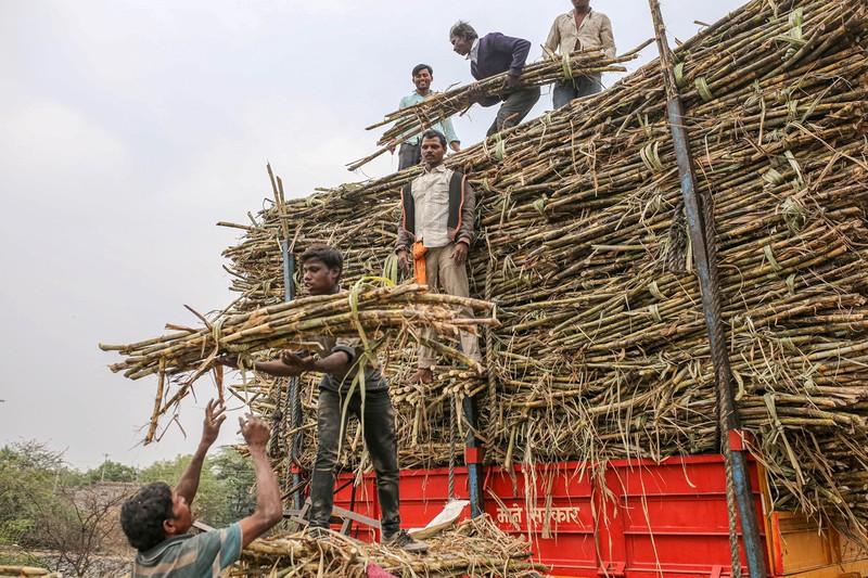 サトウキビのエタノール向け需要が増えて砂糖価格を押し上げている(インド)(Bloomberg)
