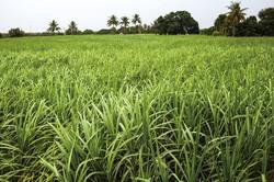 農水産物が豊かなタイ (Bloomberg)