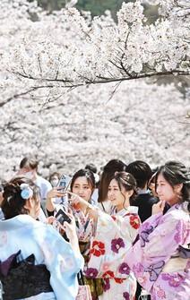 Kimono-clad visitors take selfies with cherry blossoms along the Keage Incline railway slope in Kyoto's Sakyo Ward, on March 27, 2021. (Mainichi/Kazuki Yamazaki)