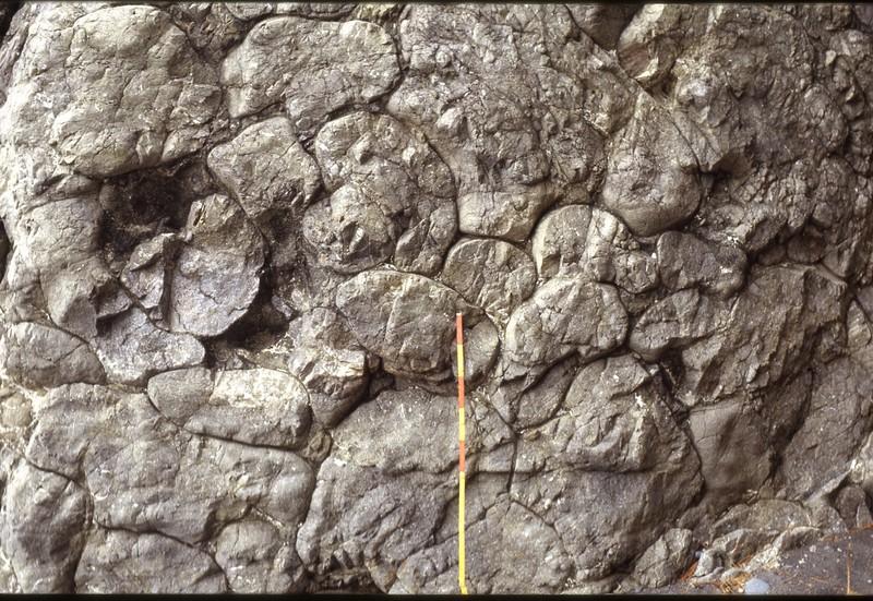 静岡県大崩海岸に露出する1600万年前に噴出した枕状溶岩 筆者撮影