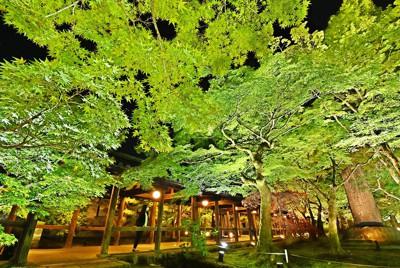 特別夜間拝観の試験点灯で照明に照らし出された東福寺の「青もみじ」=京都市東山区で2021年4月20日、山崎一輝撮影