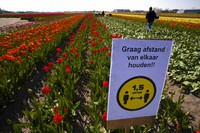 In this March 26, 2021 file photo, a sign asking people to observe social distancing and keep 1.5 meters, or five feet, apart to reduce the spread of the coronavirus was put up in a field of tulips in Lisse, Netherlands. (AP Photo/Peter Dejong)