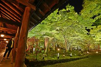 Fresh green maple leaves are lit up during a trial event at Tofuku-ji temple in Kyoto's Higashiyama Ward on April 20, 2021. (Mainichi/Kazuki Yamazaki)