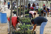 Beneficiaries of Planting Life, a jobs and reforestation program promoted by Mexican President Andres Manuel Lopez Obrador, prepare seedlings for planting in Kopoma, Yucatan state, Mexico, on April 22, 2021. (AP Photo/Martin Zetina)