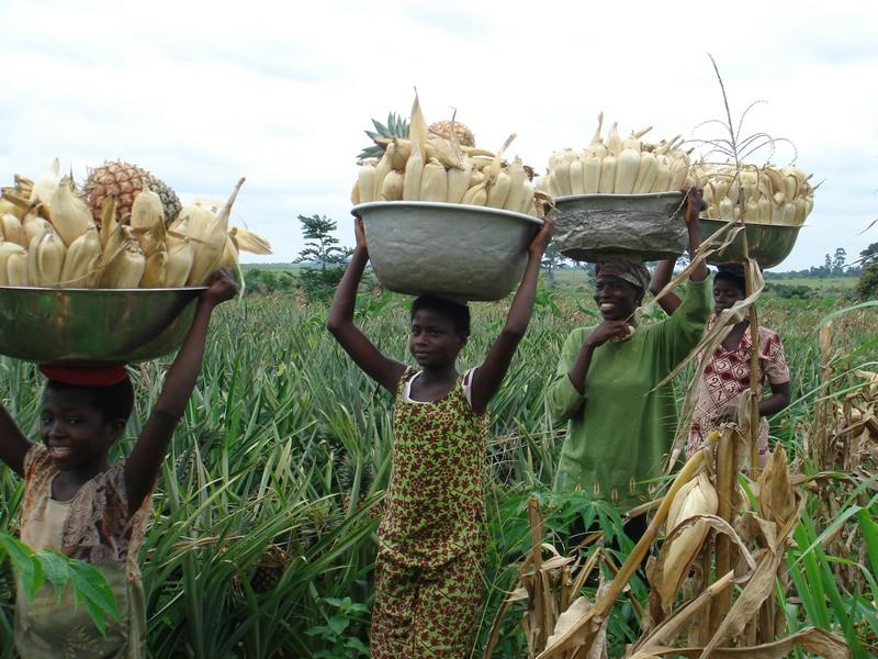 アフリカの農家 筆者撮影