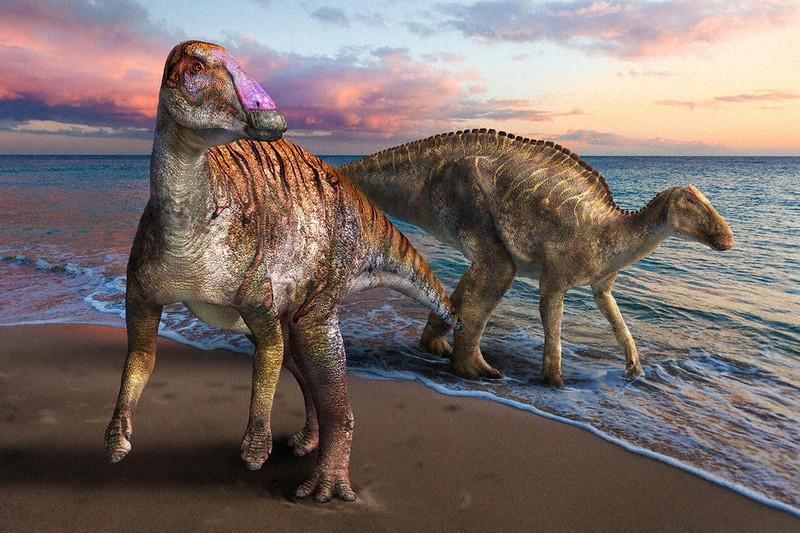 新種の恐竜、ヤマトサウルス(その1) 兵庫・淡路島の化石