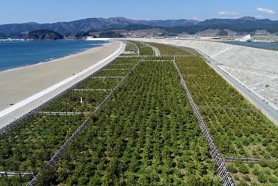 東日本大震災から10年。松の苗木4万本の植樹がまもなく終わり、緑色の松林が再び育ちつつある「高田松原」=岩手県陸前高田市で2021年4月22日、小型無人機で手塚耕一郎撮影