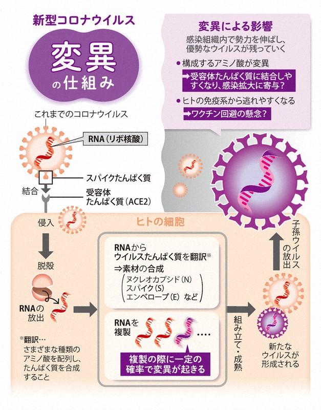ウイルス 新型 発生 コロナ なぜ