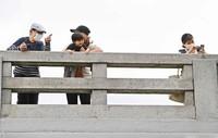 People on a bridge watch ducklings move from a local temple to the Kamo River in Kyoto's Sakyo Ward on May 13, 2021. (Mainichi/Kazuki Yamazaki)
